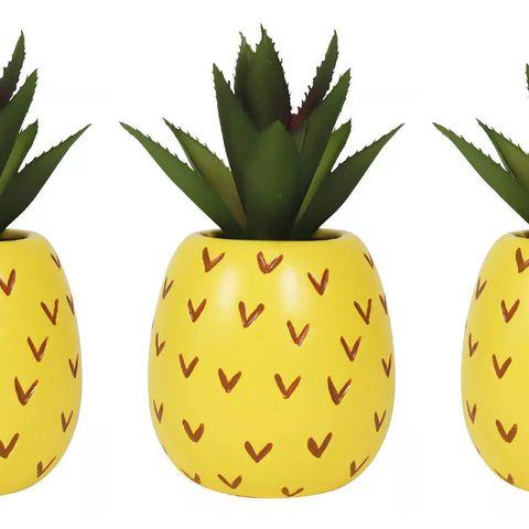 pineapple succulents