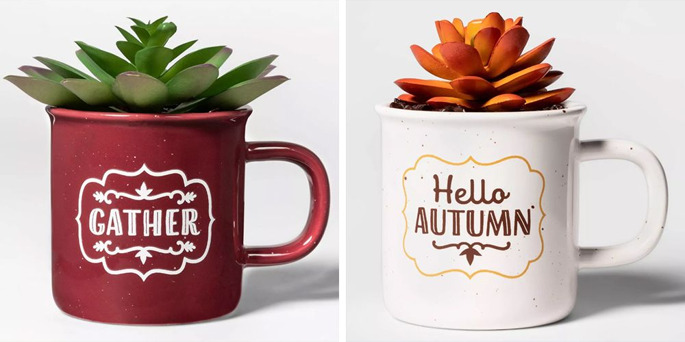 Target's New Thanksgiving Succulents Will Add a Festive Touch to Your Home