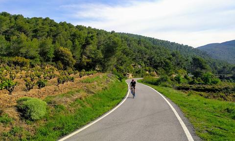 Road, Vegetation, Mountainous landforms, Natural landscape, Thoroughfare, Mountain pass, Wilderness, Hill, Tree, Mountain,
