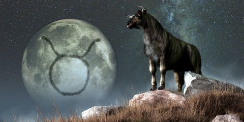 taurus is the second astrological sign of the zodiac its symbol is the bull here depicted as a black bull