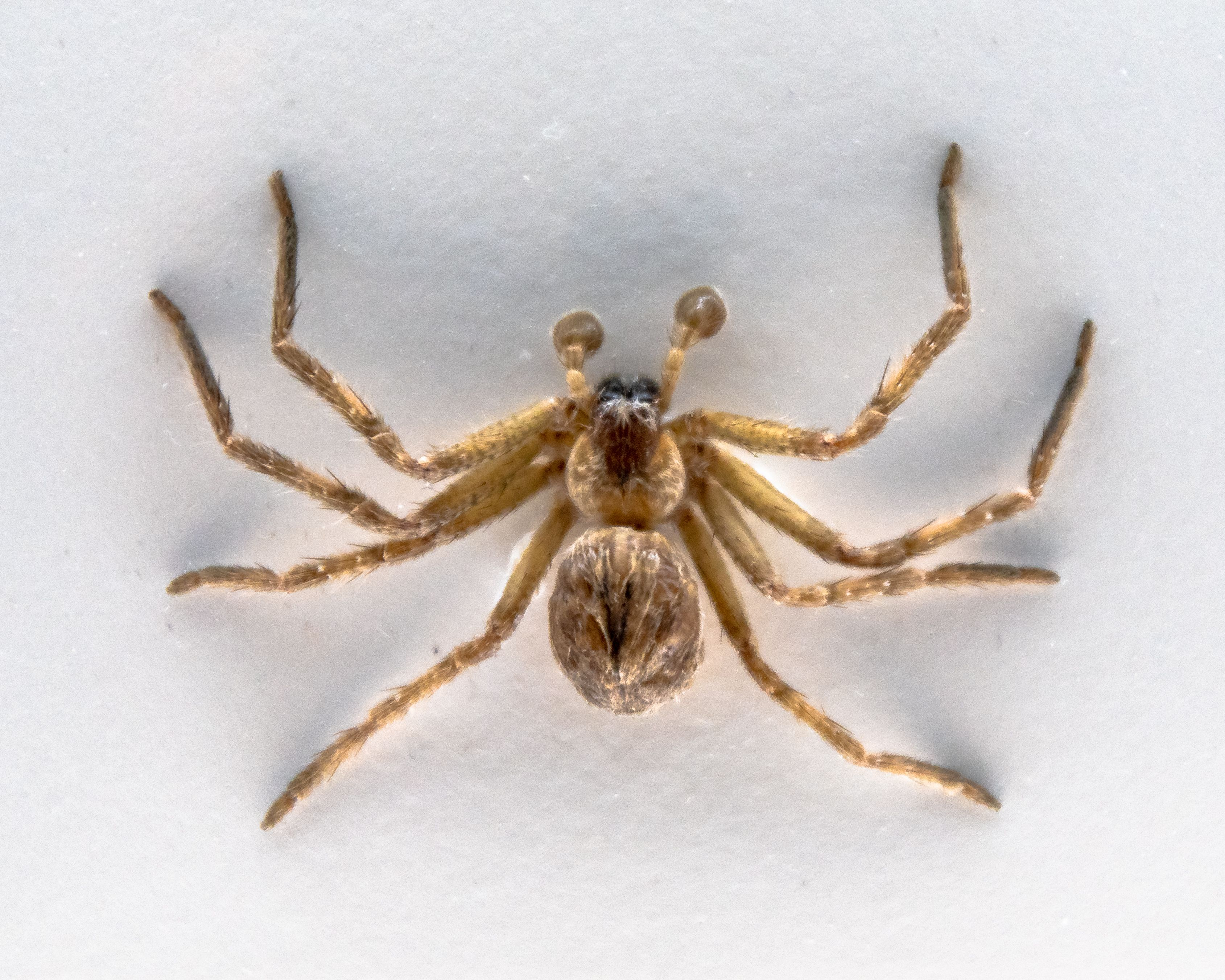 This Photo of a Huntsman Spider Eating a Possum Is Giving the Internet Nightmares