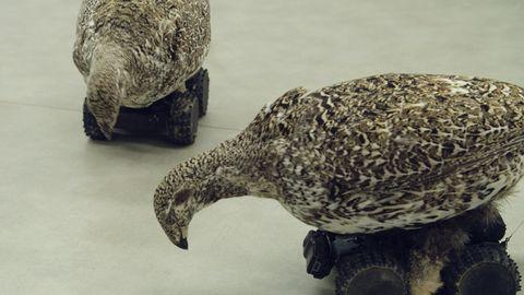 Beak, Terrestrial animal, Bird, Wildlife,