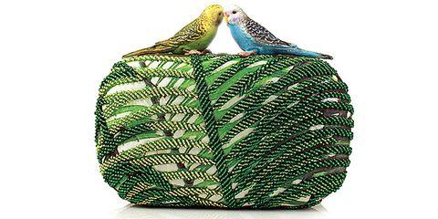 Green, Organism, Bird, Feather, Adaptation, Beak, Wing, Teal, Botany, Turquoise,