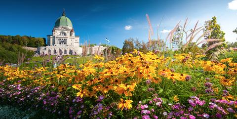 Flower, Sky, Garden, Botanical garden, Plant, Spring, Botany, Wildflower, Flowering plant, Summer,