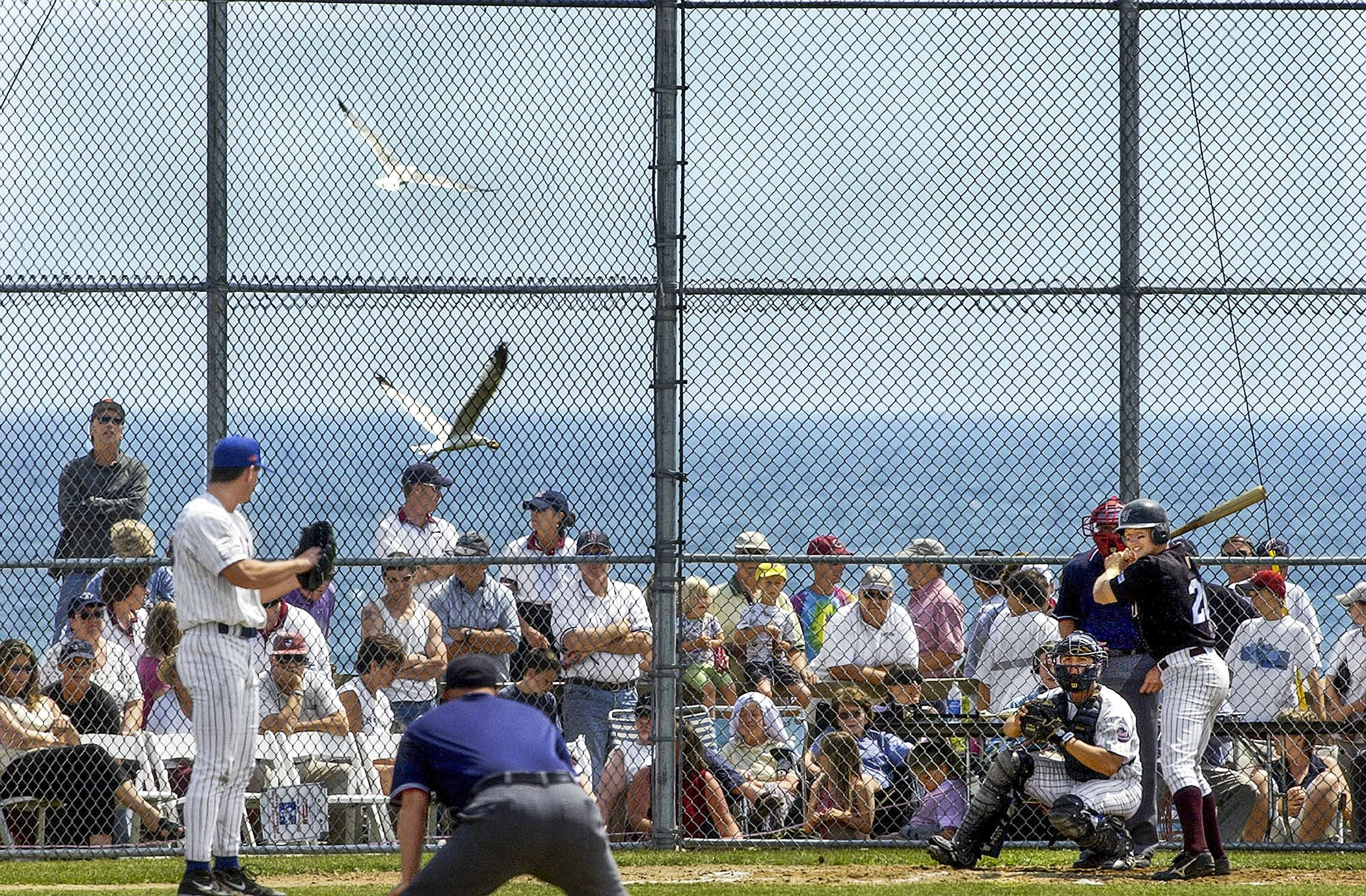 The Cape Cod Baseball League Best Amateur Baseball Players Love