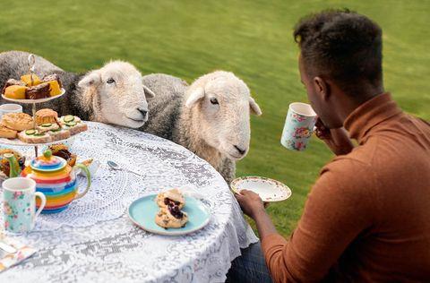 Tomar el té con ovejas, una experiencia de Airbnb