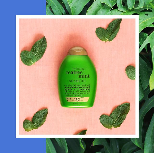 tea tree shampoo best 2020