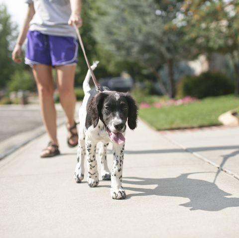 teenage girl walking dog