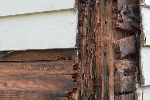home repair   rotted wood