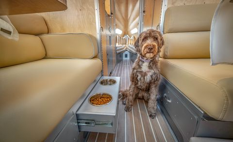 bowlus road chief terra firma pet flex