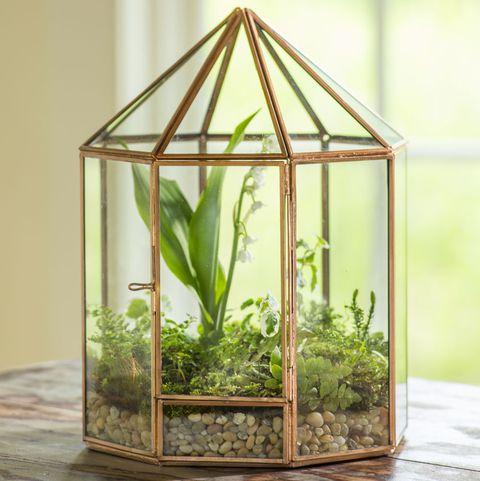Tabletop Terrariums Give You A Wintertime Gardening Fix