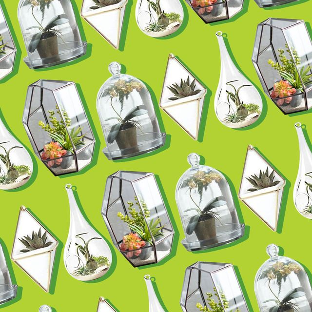 10 Best Terrariums To Buy In 2020 Top Rated Terrarium Kits
