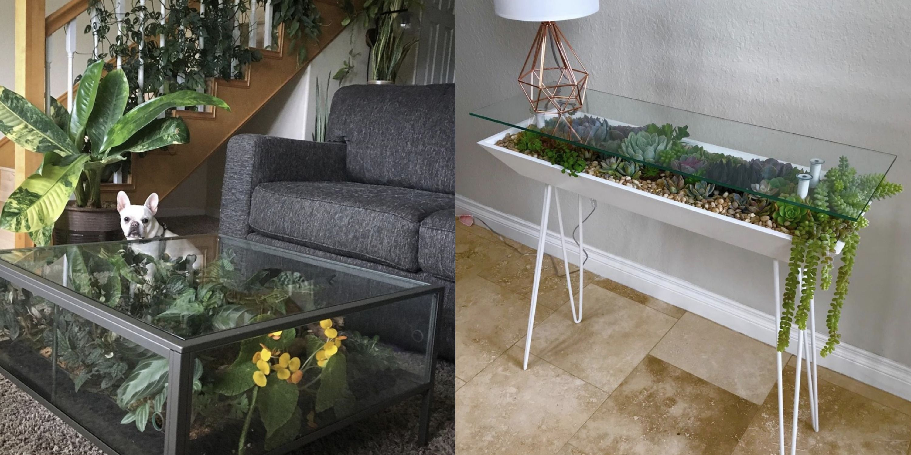 Here S How To Make Your Own Terrarium Coffee Table Diy Terrarium Coffee Table Guide