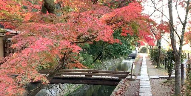 京都・哲学の道 紅葉