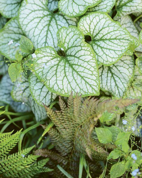 Variegated foliage in Clapton garden