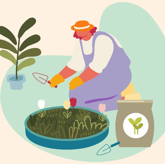 the 10 best fertilizers for your houseplants and garden