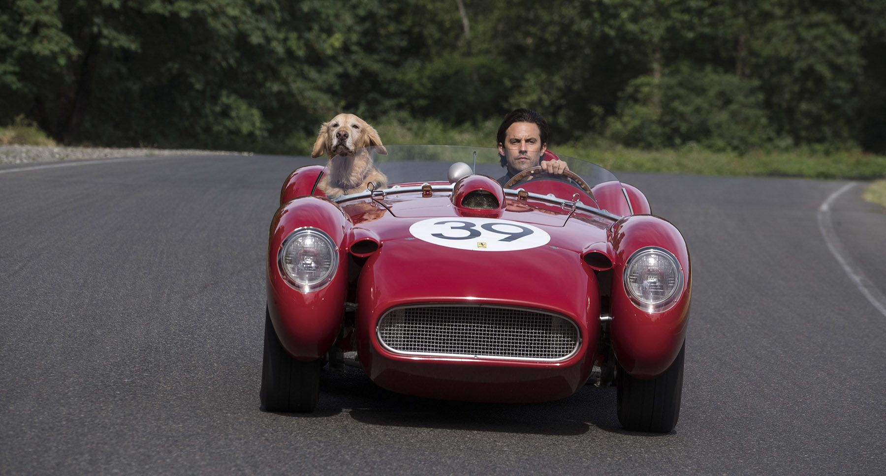 The Art Of Racing In The Rain Comes To Movie Theaters This Week