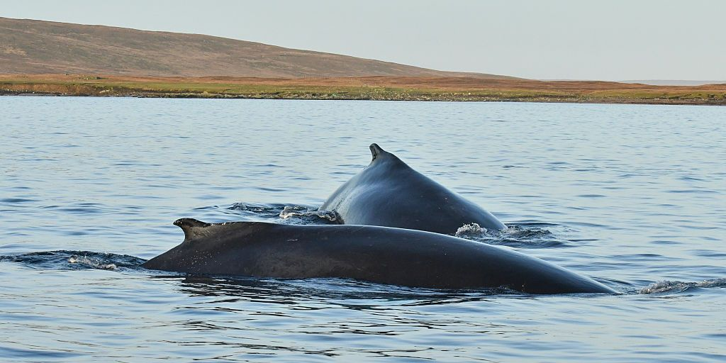 The first ever UK whale watching tour will open in Scotland in 2019, and it sounds like a dream trip