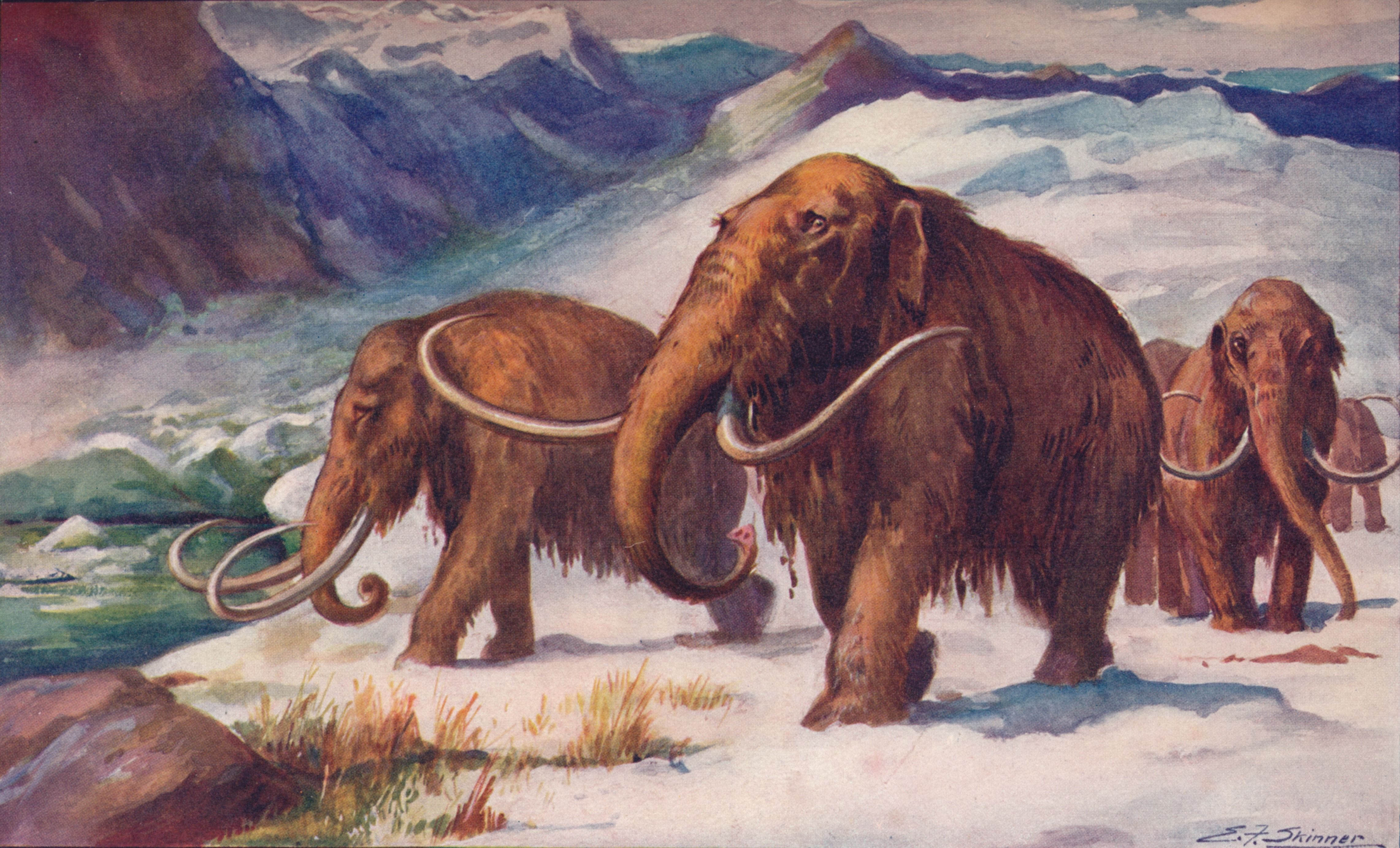 Neanderthals and Woolly Mammoths Shared Genetic Traits