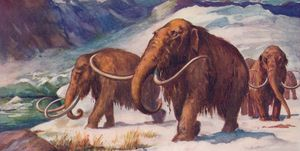 The early Ice Age