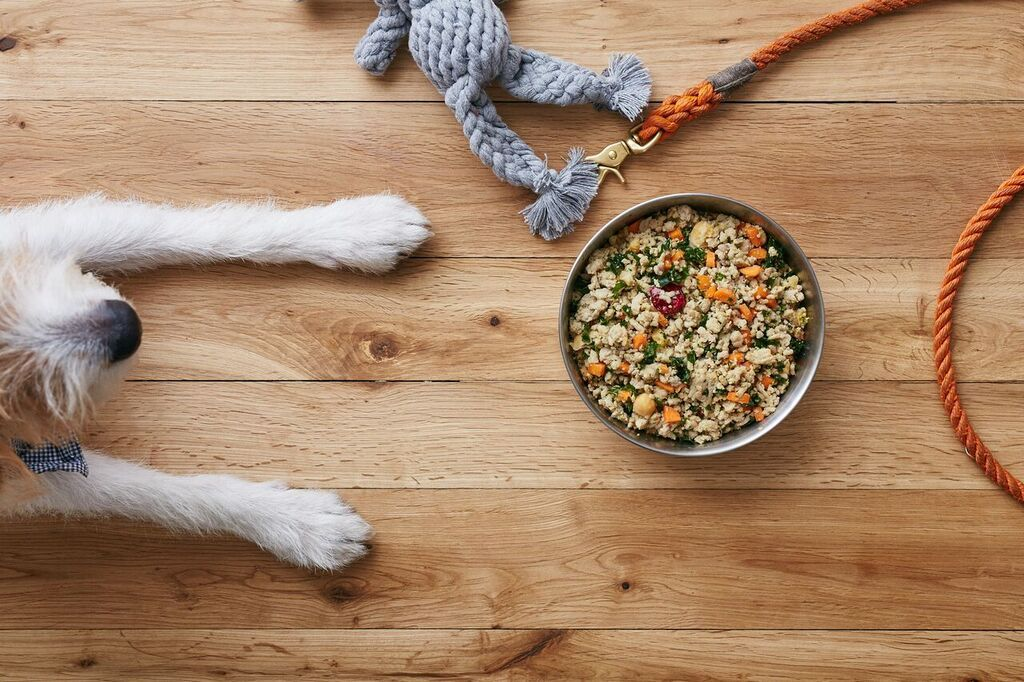 A dog laying near its food bowl