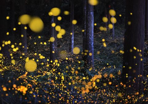 The Galaxy in woods