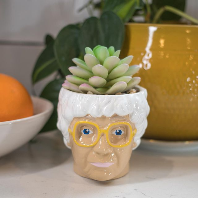 the golden girls sophia petrillo face mini ceramic planter with faux succulent