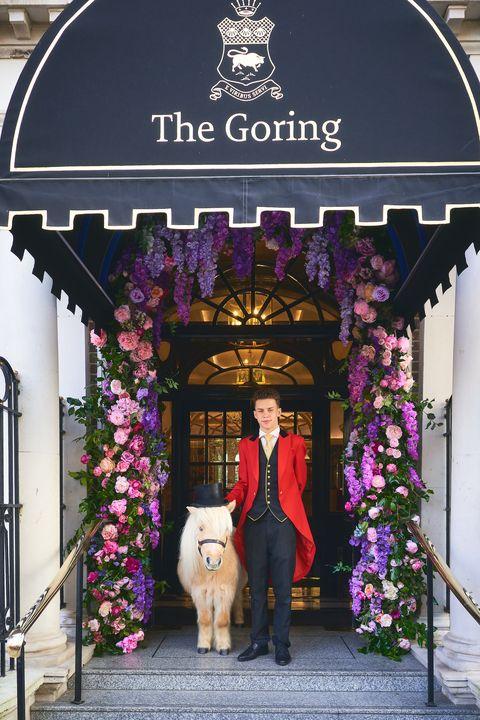 the goring pony
