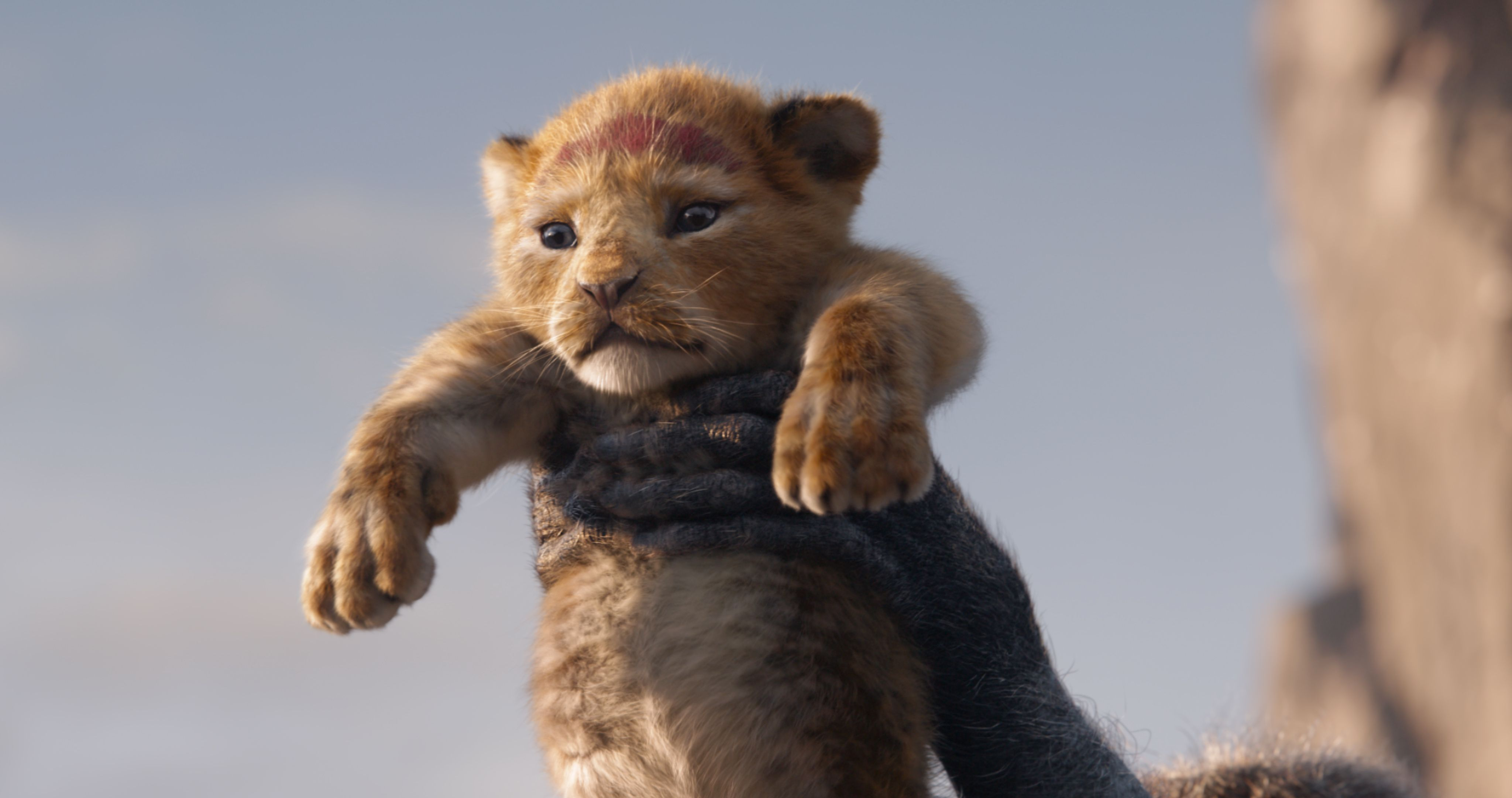 How The New Lion King Film Could Help The Real Life Lion Crisis