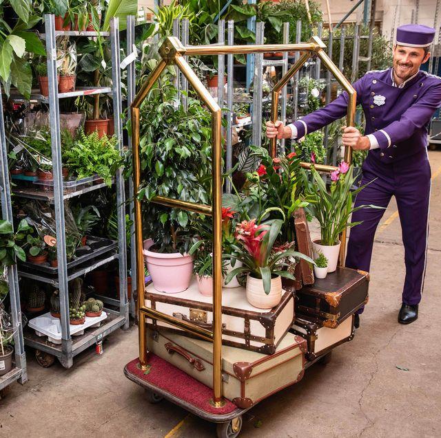 patch plant hotel in battersea, london