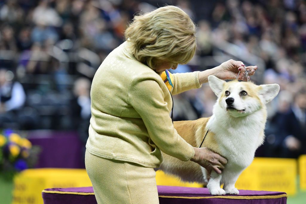 The Funniest 2019 Westminster Dog Show Photos - Best Dog