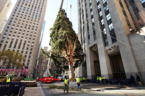 2020 christmas tree delivered to rockefeller center for holiday season