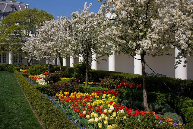 usa   white house   rose garden with flowers in bloom