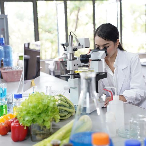 the scientist use the microscope looking at microbial contamination in vegetables