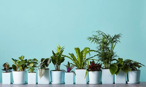 A row of plants from The Sill on a blue background