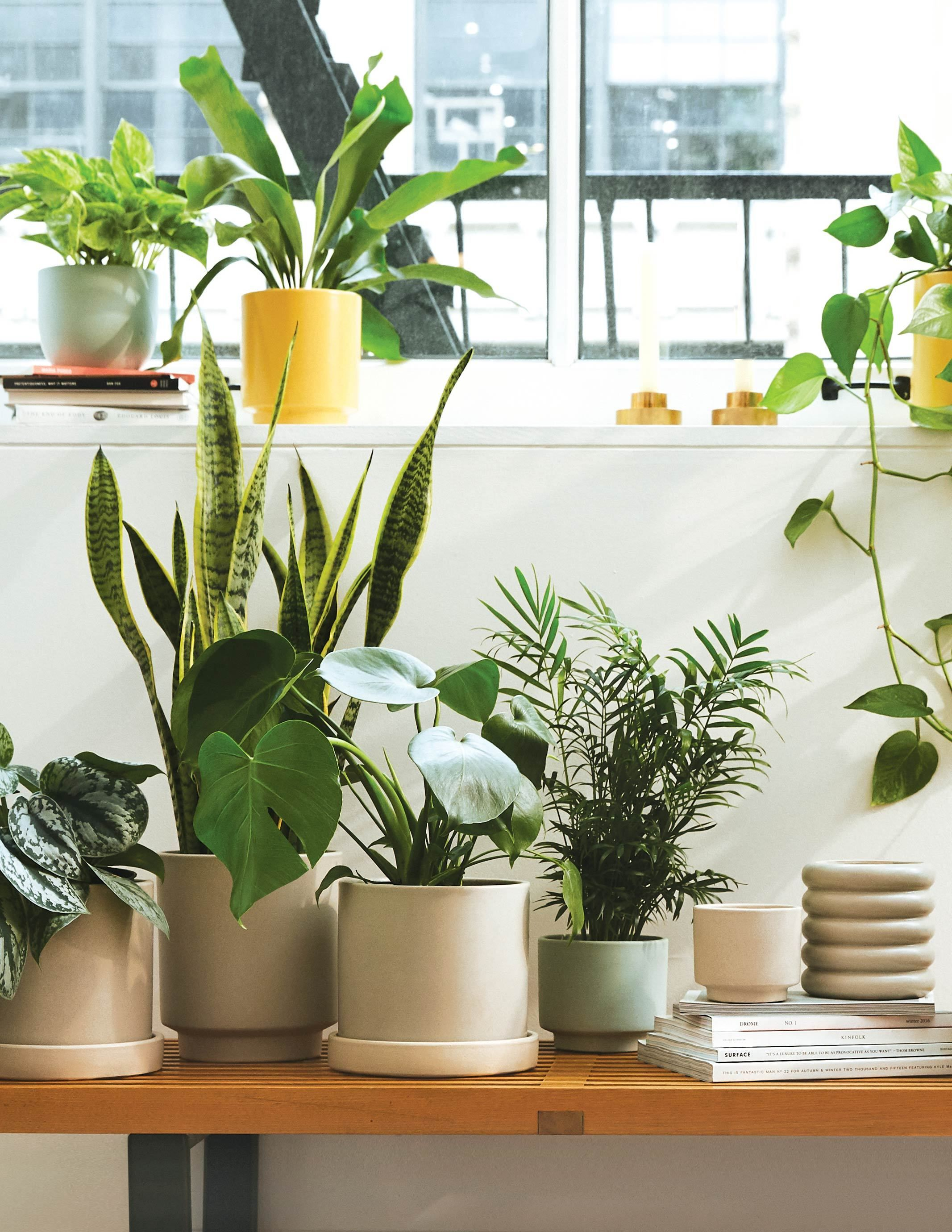 You'll Never Kill Another Plant Thanks to The Sill's New Virtual Appointments