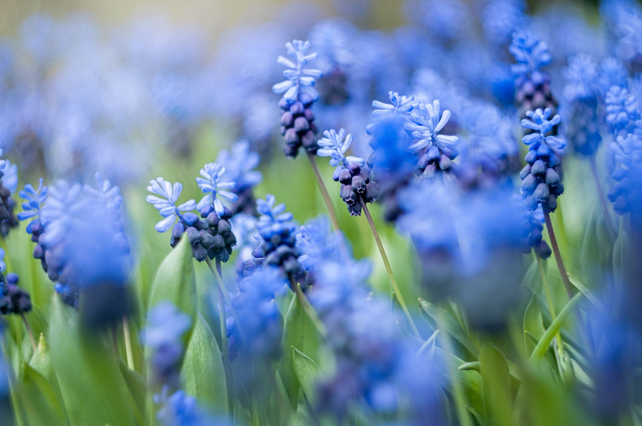 20 Blue Flowers for Gardens , Perennials \u0026 Annuals With Blue