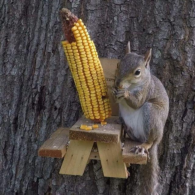 the squirrel shop mini picnic table