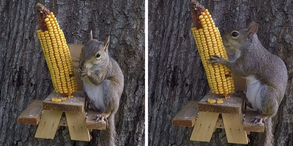 People Are Buying This Mini Picnic Table to Give Their Squirrels a Proper Meal