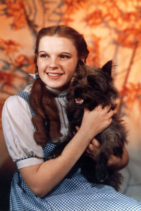 toto, the wizard of oz, judy garland, movie, pet