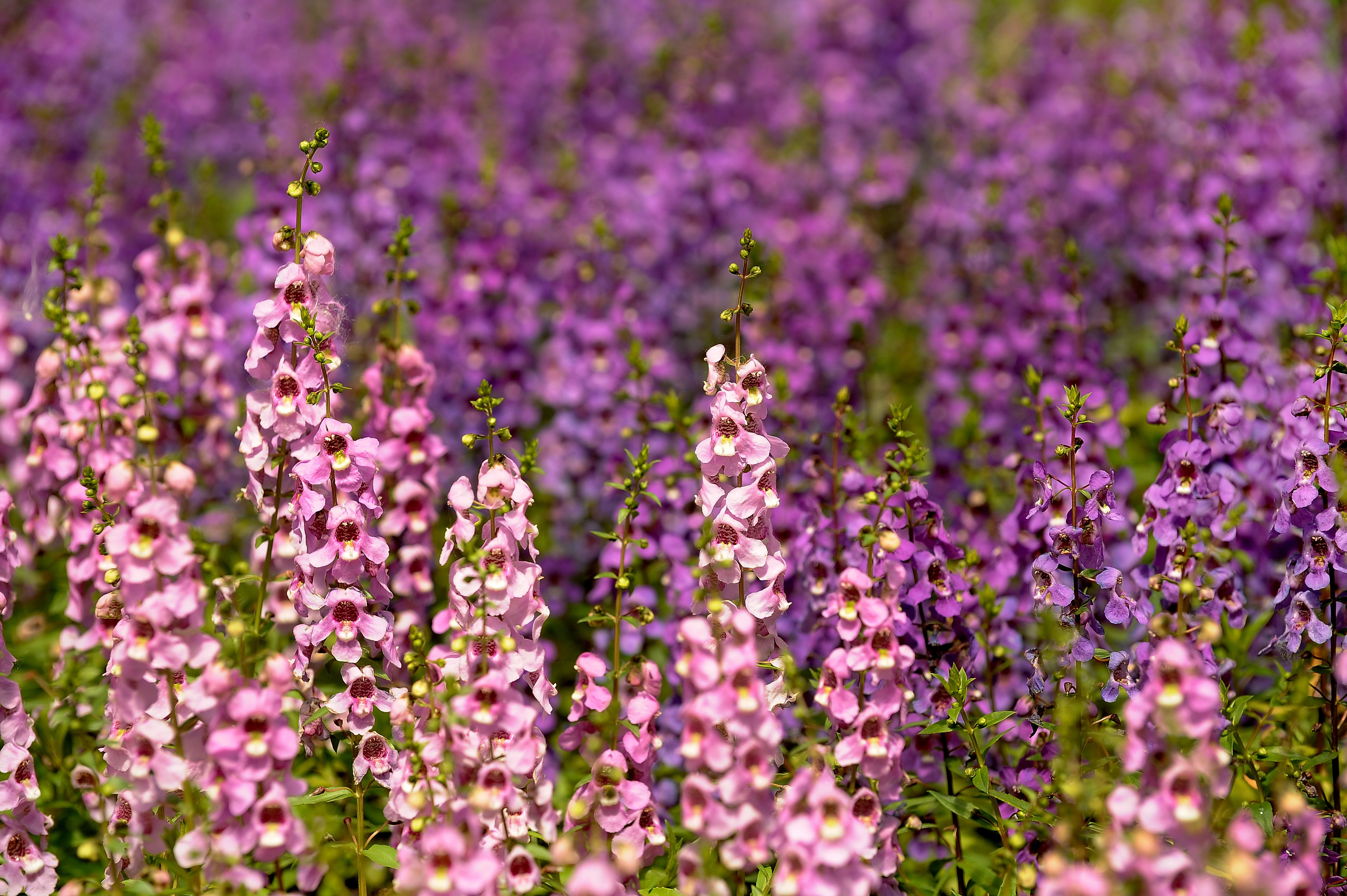 20 Drought-Resistant Plants for a Beautiful Yard Even in Dry Climates