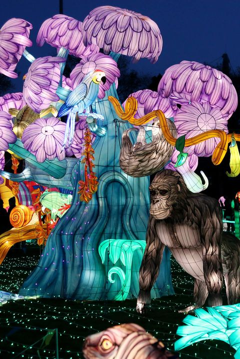 luminocity festival jungle lanternscape   things to do on new year's day