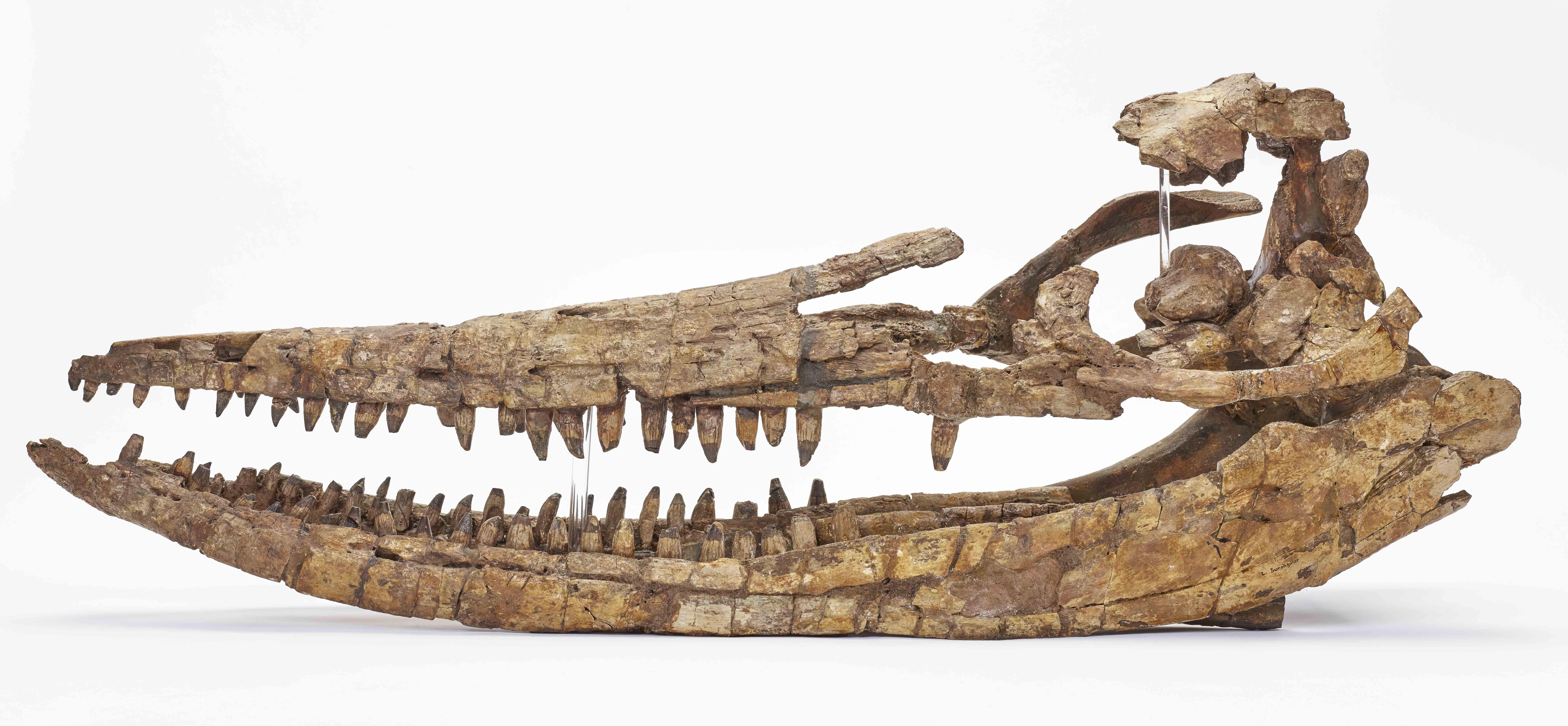manchester thinktank museum skull