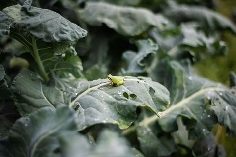 JAPAN-FOOD-ORGANIC-AGRICULTURE