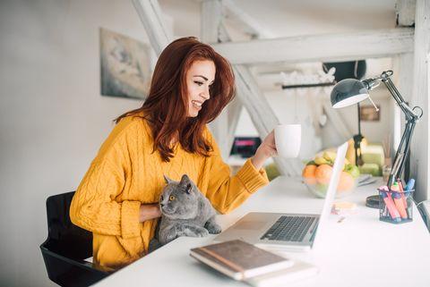 vrouw werkt met kat op schoot