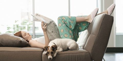 Couch, Canidae, Dog, Furniture, Companion dog, Comfort, Room, Living room, Dog breed, Carnivore,