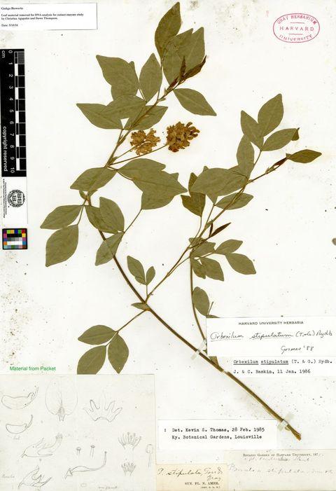 Extinct plant