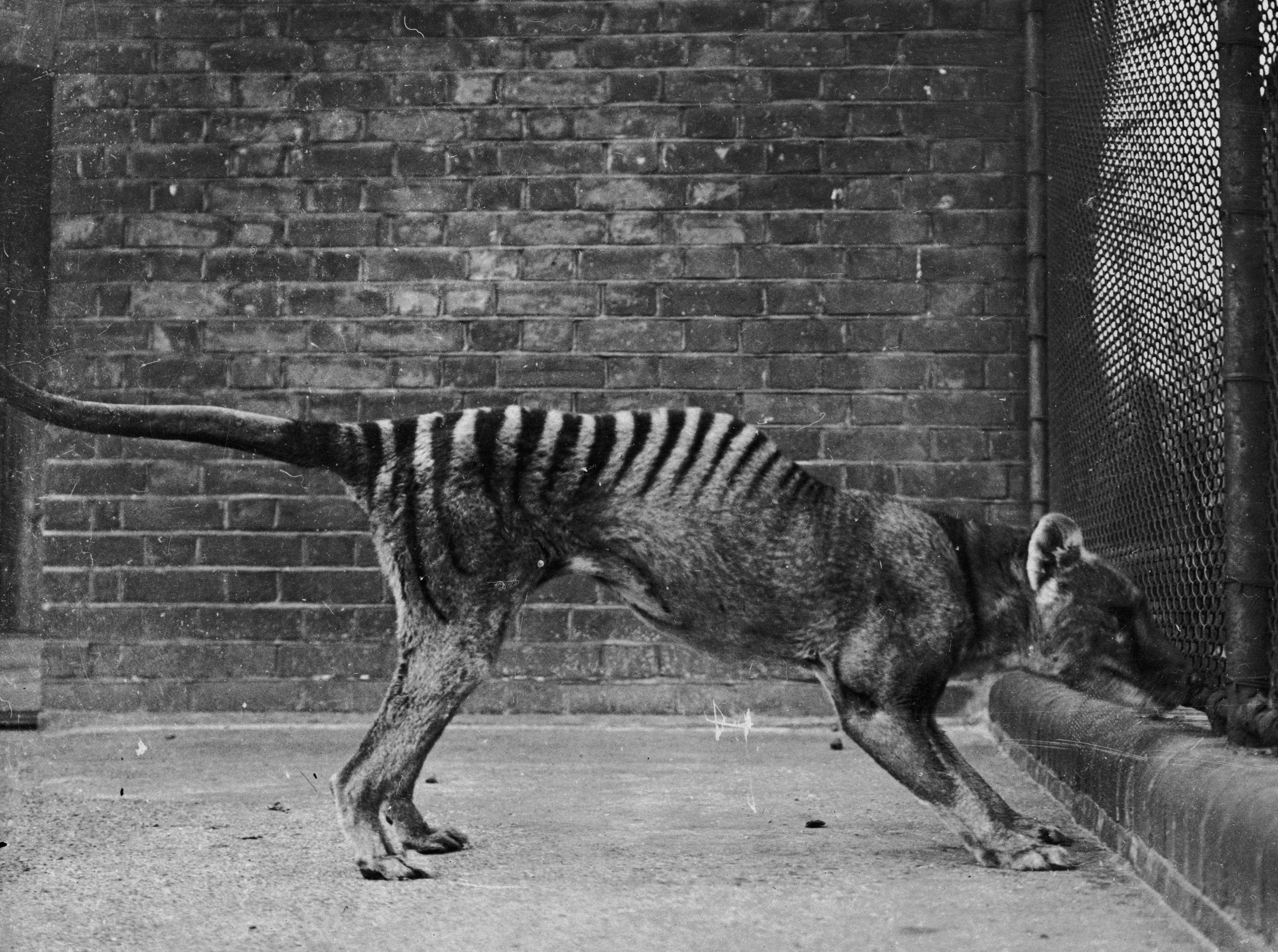 Extinct Animals 2019 | List of Extinct Species