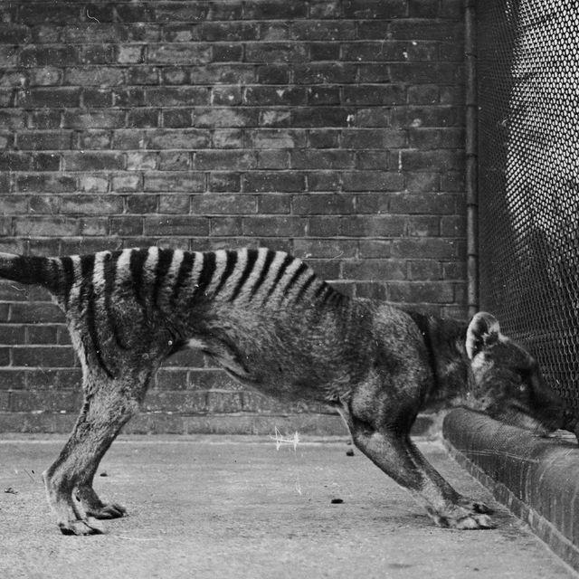 Weird Animals That Went Extinct 1