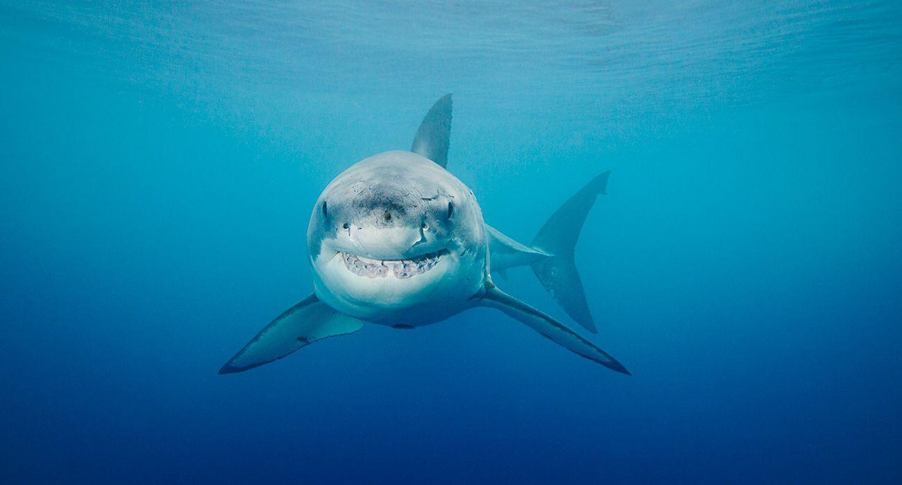 30 cosas que quizás no sabías sobre los tiburones - Curiosidades ...